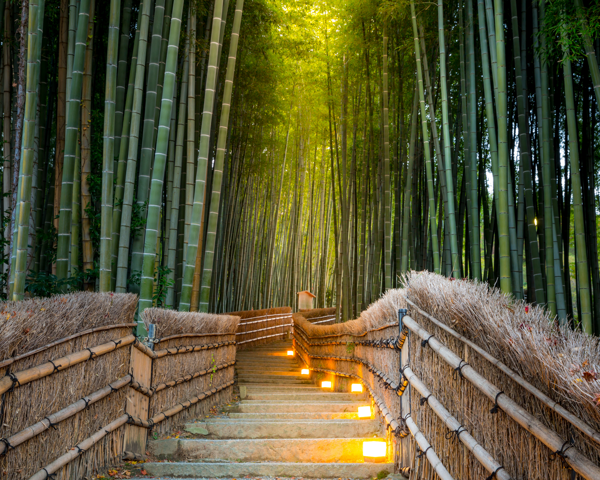 Stairway through bamboo forest